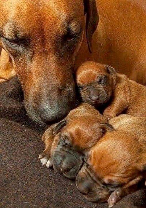 Ασφάλεια για τα μικρά ή μάνα τους... 1