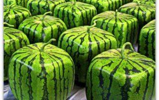 Γνωρίζατε ότι, υπάρχει στην αγορά τετράγωνο καρπούζι;;;...