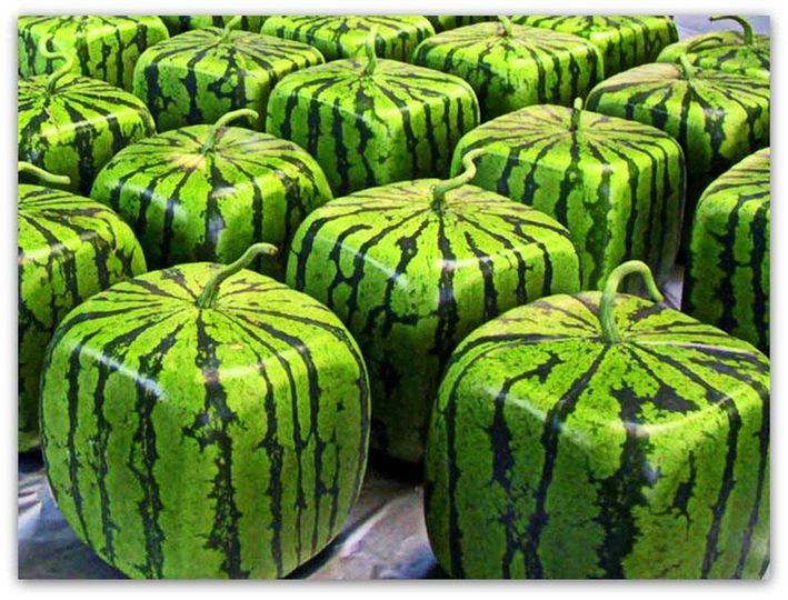Γνωρίζατε ότι, υπάρχει στην αγορά τετράγωνο καρπούζι;;;... 1