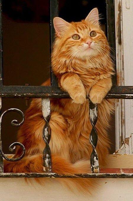 Πολύ χαριτωμένη γατούλα !!... 1
