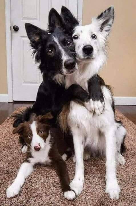 όμορφη οικογένεια... 1