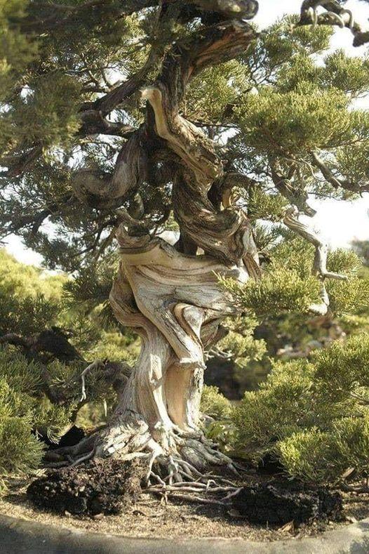 ′ Το στριμμένο δέντρο ζει τη ζωή του...,... 1