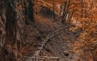 Autumn  hajro.photography...
