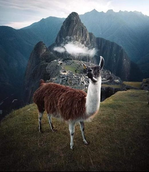 Machu Picchu, Peru conormccann... 1
