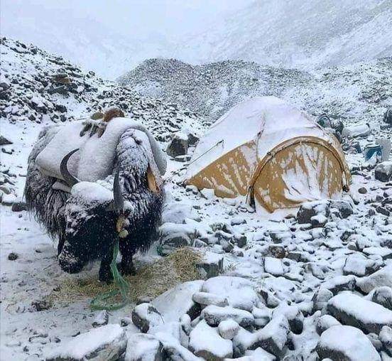 #Yak Boroghil Chitral Pakistan... 1